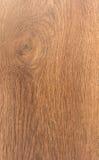 Oak tree. Wood imitation background Stock Image