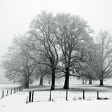 Oak tree wood in Winter Stock Photo