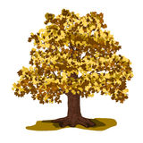 Oak tree with yellow leaves Royalty Free Stock Photo