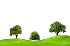 Oak trees Stock Image