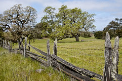 Oak trees. Beautiful landscape, springtime pastoral scene with old wooden fence and oak trees Royalty Free Stock Image