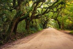 Oak trees along the dirt road to Botany Bay Plantation on Edisto Royalty Free Stock Images