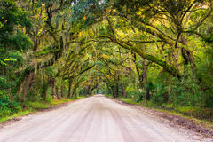 Oak trees along the dirt road to Botany Bay Plantation on Edisto Royalty Free Stock Image