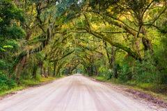 Oak trees along the dirt road to Botany Bay Plantation on Edisto Royalty Free Stock Image
