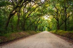 Oak trees along the dirt road to Botany Bay Plantation on Edisto Stock Photo