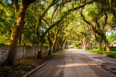 Oak trees along Magnolia Avenue in St. Augustine, Florida. Stock Image