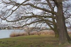 Oak trees Stock Photos