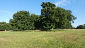 Oak trees and Chestnut trees stock photo