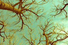 oak trees and clear sky in forest, vintage style Stock Photos