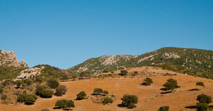 Oak trees in Corsica Royalty Free Stock Images