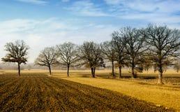 Oak trees on countryside field Stock Photo