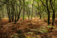 Oak trees and ferns Stock Photo