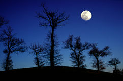 Oak trees and full moon Stock Photo
