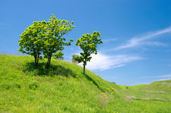 Oak trees on the green hill Stock Photos