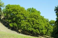 Oak trees grow on the slopes . Stock Photos