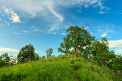 Oak trees on hill Royalty Free Stock Photography