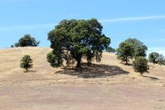 Oak Trees On Hillside Royalty Free Stock Photos