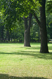 Oak trees on lawn Royalty Free Stock Images