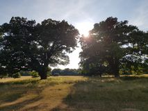 Oak trees agree Royalty Free Stock Photo