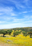 Oak trees in mediterranean forest. At Portugal Stock Photo