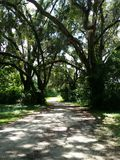 Oak trees on nature trail Stock Images