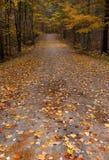 Fall colours in Ontario Canada giant oak trees stock photos