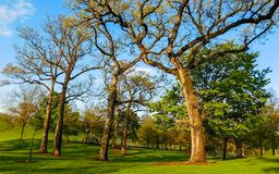 Oak Trees In Park On A Sunny Day. Oak Trees On A Sunny Day, Dundee Township Park District, Illinois USA stock photos