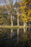 Oak trees and reflections in canal near Woerden in the Netherlan Royalty Free Stock Image