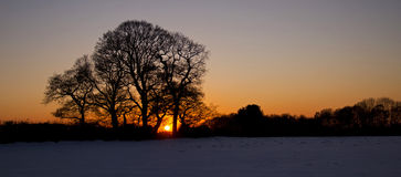 Oak Trees Silhouetted by the Sunset. Kirkby Malory, Leicestershire, England Stock Image