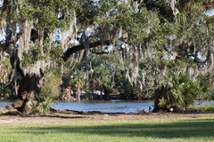Oak trees and spanish moss at pond's edge. Landscape of giant oak trees and spanish moss at pond's edge, in lush tropical urban park Stock Photo