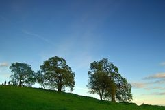 Oak trees in spring. Oak trees on a hillside in spring Royalty Free Stock Images