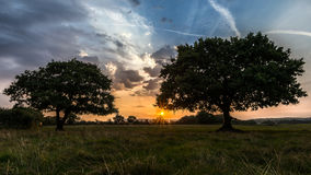 Oak Trees At Sunrise. A pair of Oak trees in Lancashire, UK royalty free stock photo