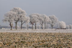 Oak trees in Winter Stock Photos
