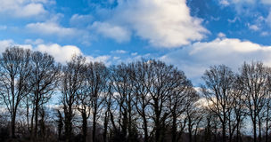 Oak Trees in Winter. Silhouette photo of bare oak trees against blue sky with clouds stock photos