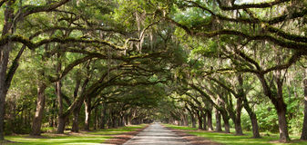 Oak Tunnel. Live oak trees create a tunnel effect Stock Images