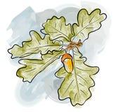 Oak twig Royalty Free Stock Photography