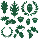 Oak. Vector illustration (EPS 10 Royalty Free Stock Images