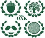 Oak Royalty Free Stock Photo