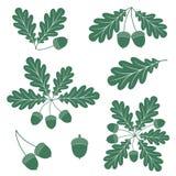 Oak royalty free illustration