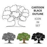 Oak vector icon in cartoon style for web Stock Image
