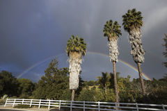 Oak View, California, USA, March 1, 2015, full rainbow over rain storm in Ojai Valley, 3 Palm Trees Stock Photography
