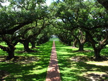 Oak Walk. Brick walkway at Oak Alley lined with very old and large Southern Live Oak trees Royalty Free Stock Photo