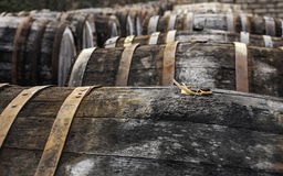 Oak wine casks on madeira ground. Open air picture of oak casks with madeira wine while maderization on sorarium Stock Image
