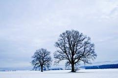 Oak in winter Stock Image