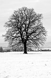 Oak in winter Royalty Free Stock Photography