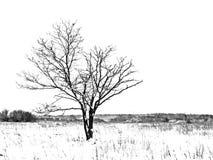 Oak on winter field Stock Image