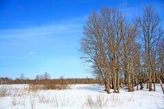 Oak wood Royalty Free Stock Images