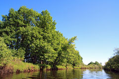 Oak wood Stock Image