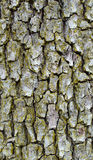 Oak wood bark texture Stock Photo