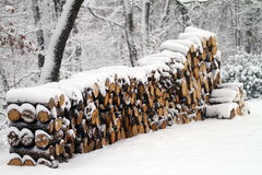 Oak wood logs covered by snow Royalty Free Stock Photo